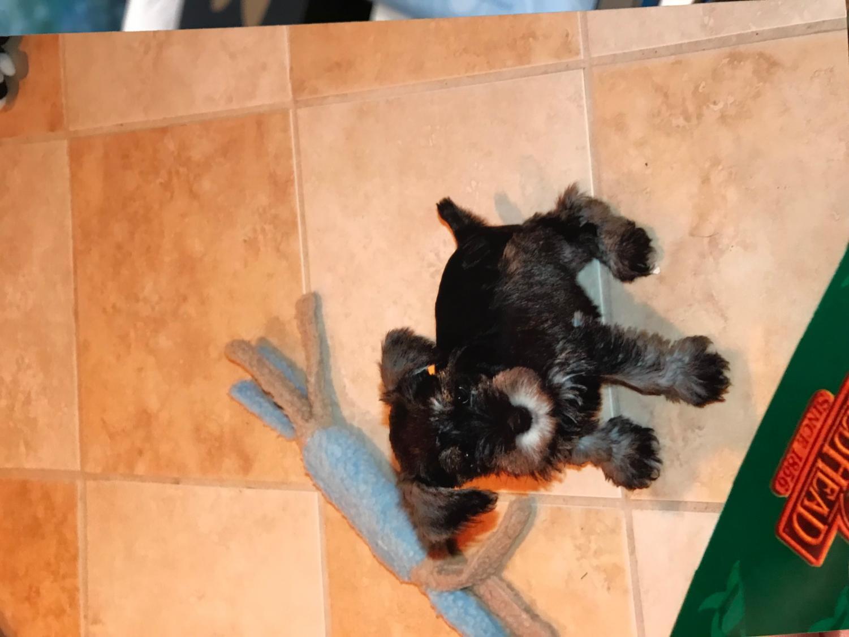 Krash as a puppy
